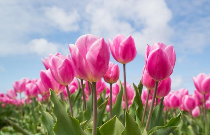How flowers got their color lillian darnell mightylinksfo